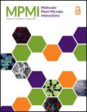 Mol Plant Microbe Interact. 2013 Jun 7